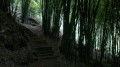 Trekking within a bamboo forest can get real gloomy in a matter of seconds.