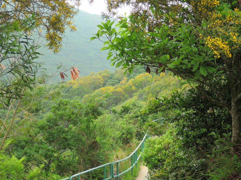 El camino a Sok Kwu se adentra en la espesura.