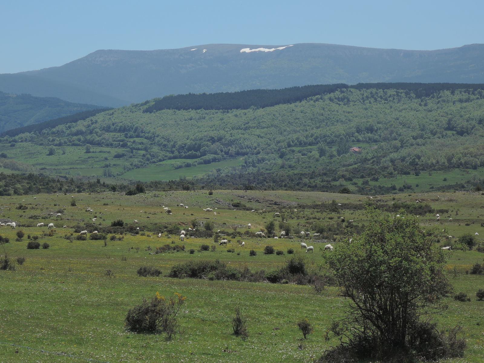 Entre Barbadillo de Herreros y Monterrubio de la Demanda.