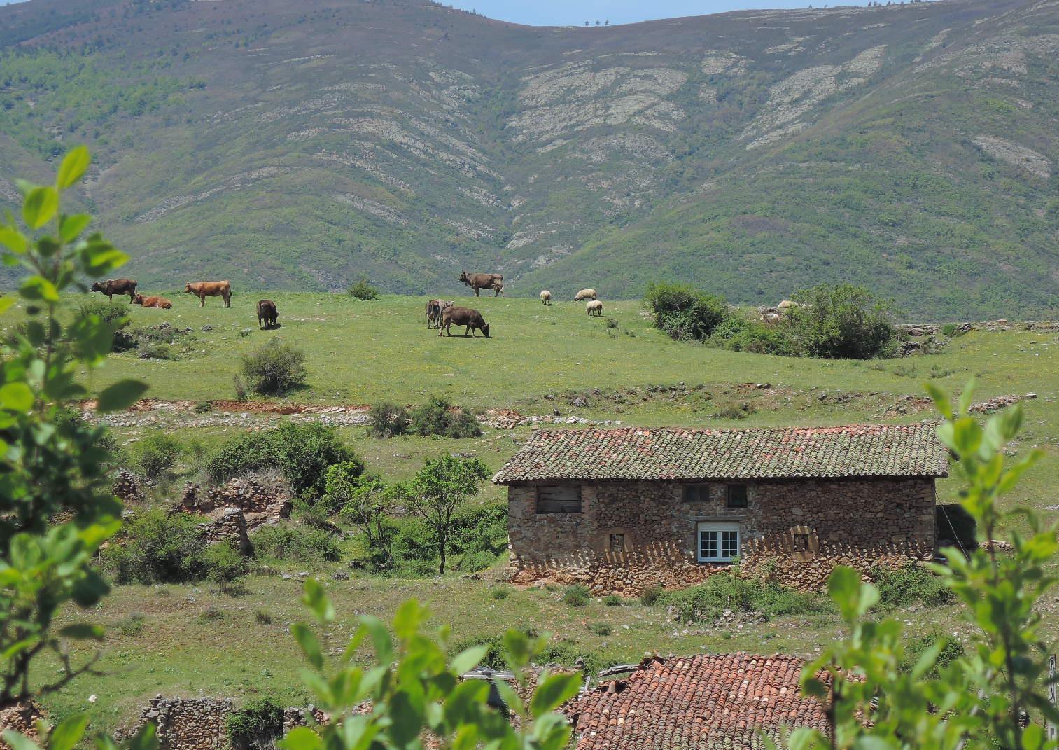 Escena campestre en el municipio de Canales.