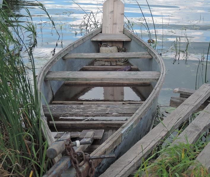 Vieja barca entre los juncos.