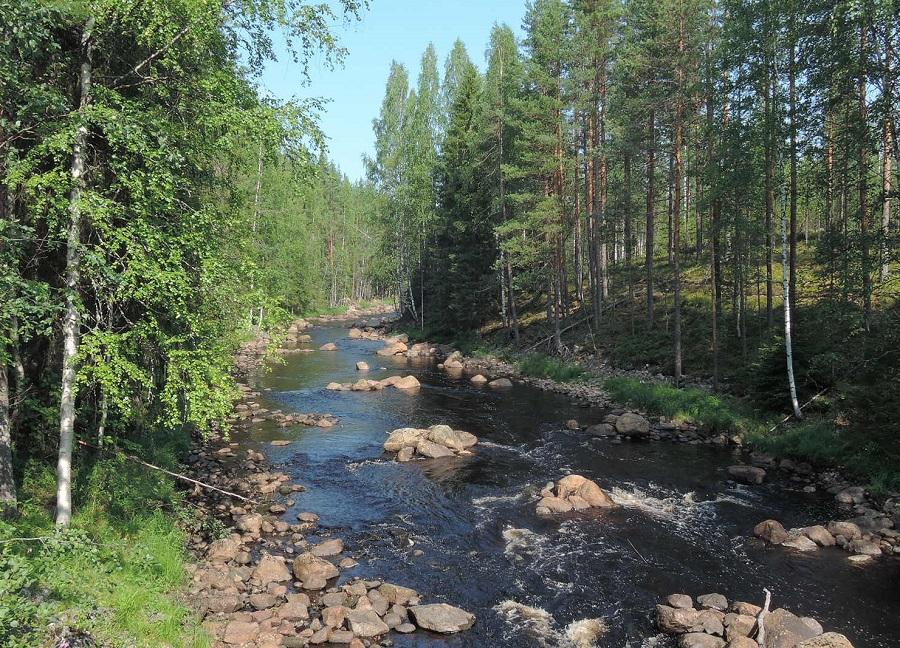 Un arroyo cualquiera, de oscuras aguas cargadas de turba