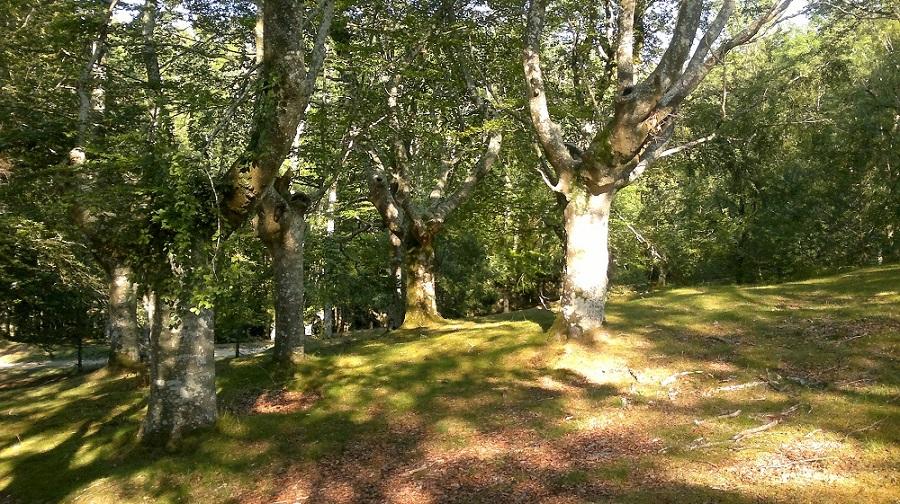 La arboleda en los alrededores invita a un día de picnic