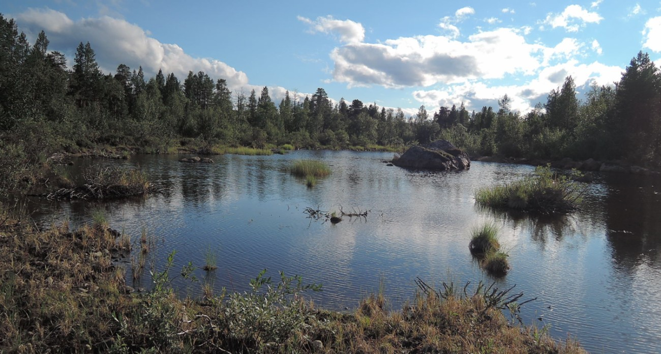Humedales en la orilla del Inarijärvi
