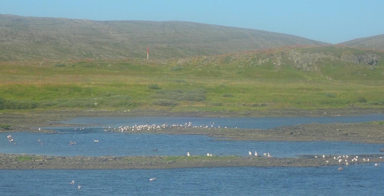 La costa norte de Noruega alberga sus mayores colonias de aves