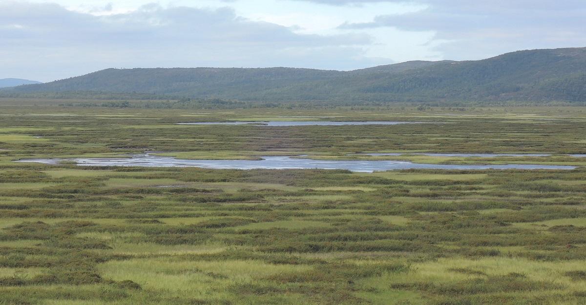 La tundra, el nuevo paisaje predominante para las futuras etapas de mi viaje