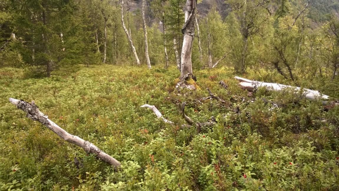 Reserva natural Laksagaosen
