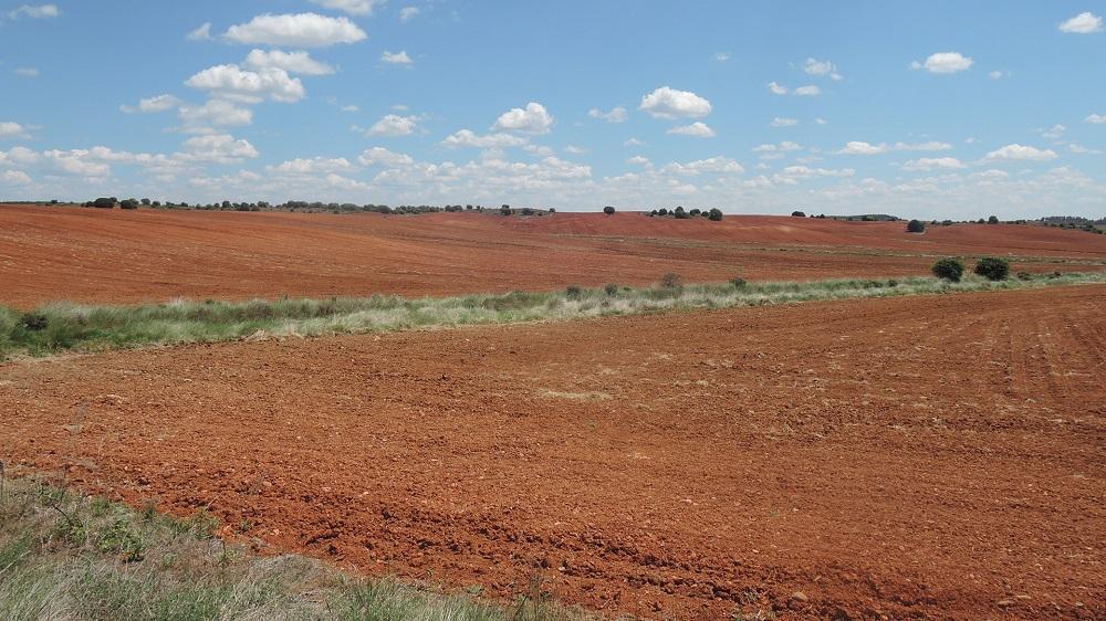 Rojos campos de Castilla