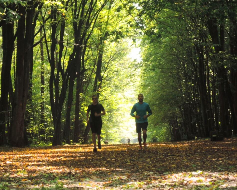 Zwierzyniec, un bosque dentro de la ciudad