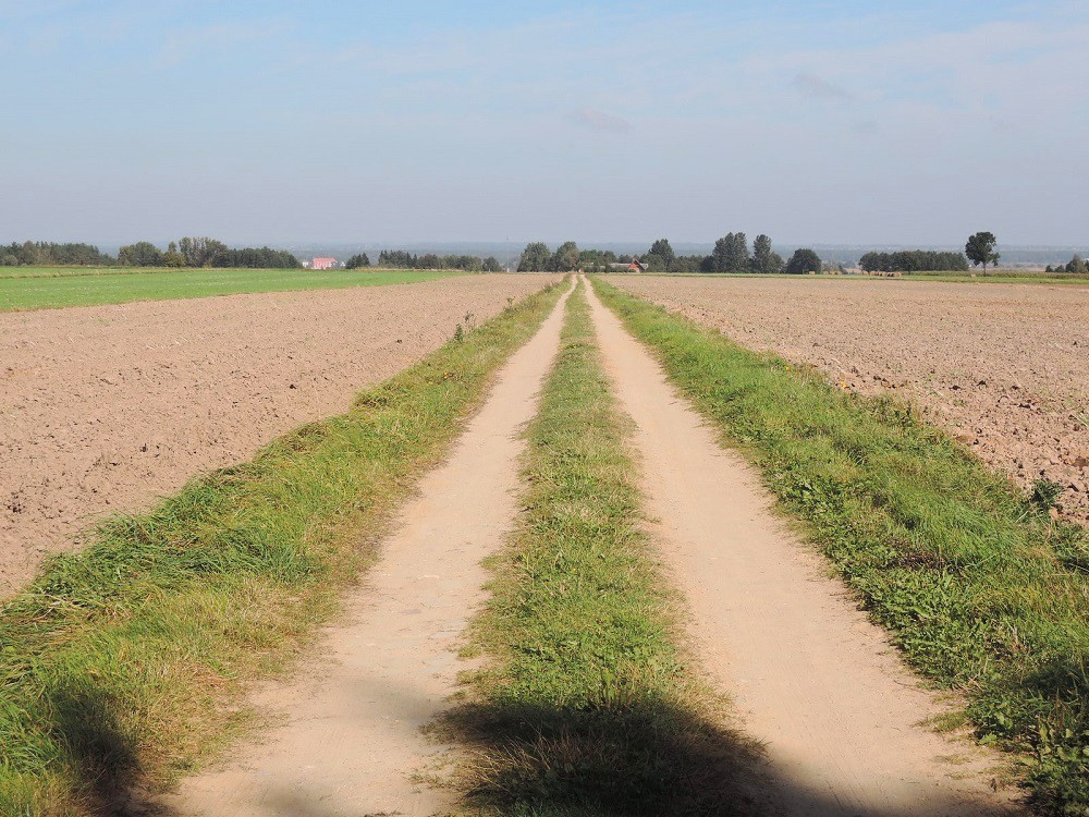 El camino que lleva a la granja
