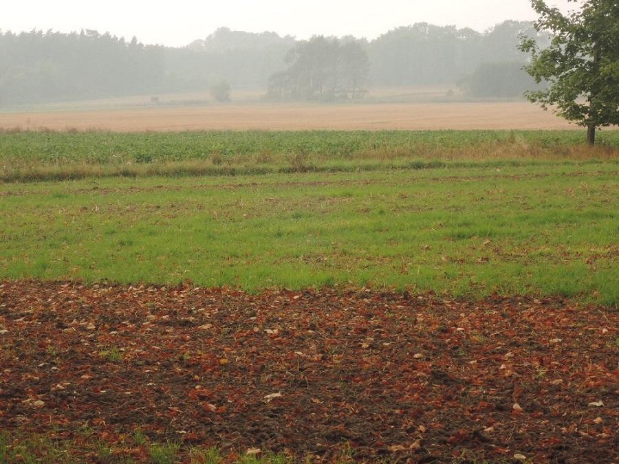 Llanuras polacas, campos otoñales