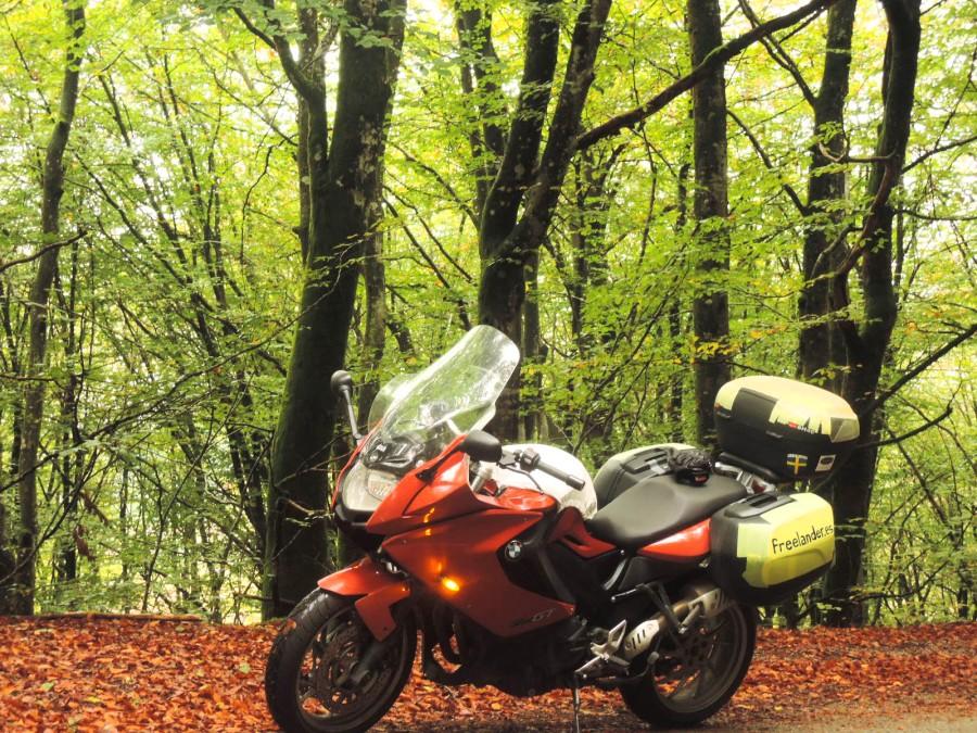 Rosaura entre la hojarasca y los árboles