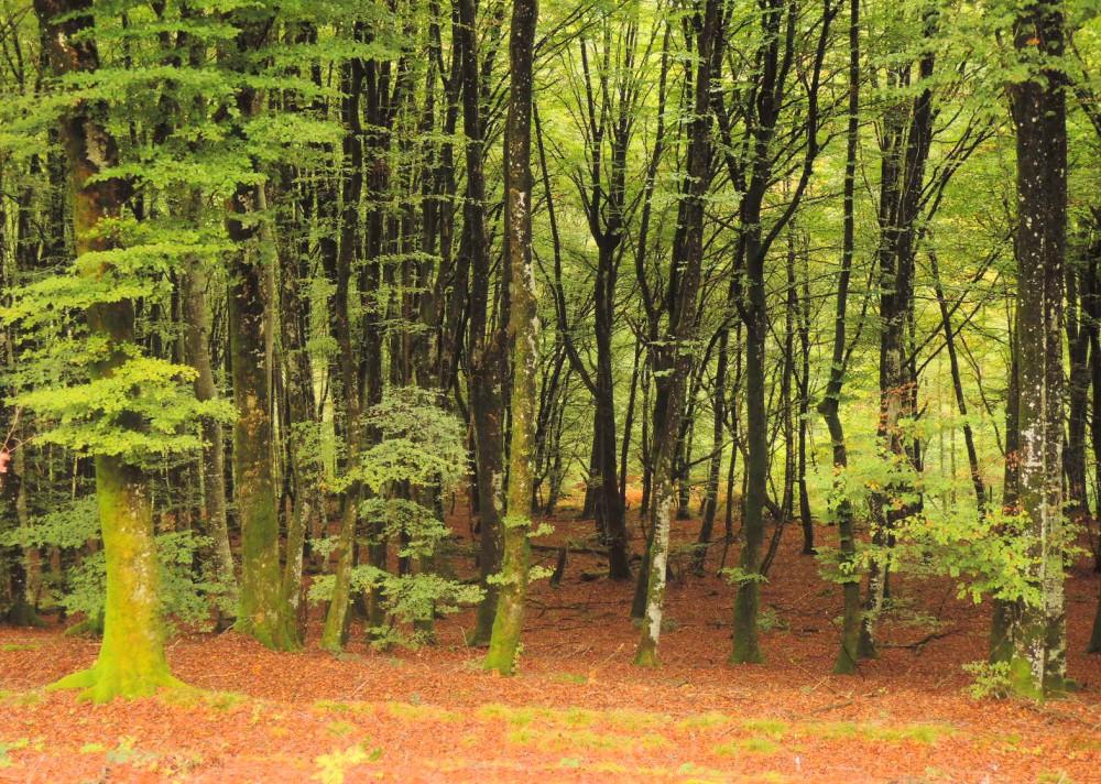 Otoño en el parque natural Morvan