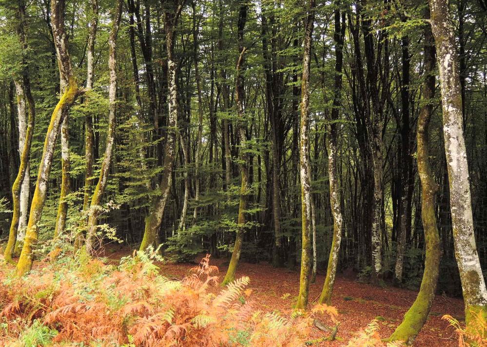 Entre los bosques otoñales de Alsacia