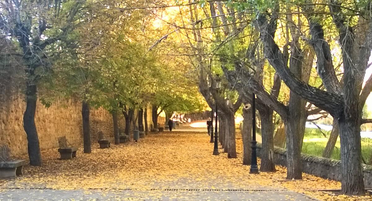 Alameda de nosédónde en Soria