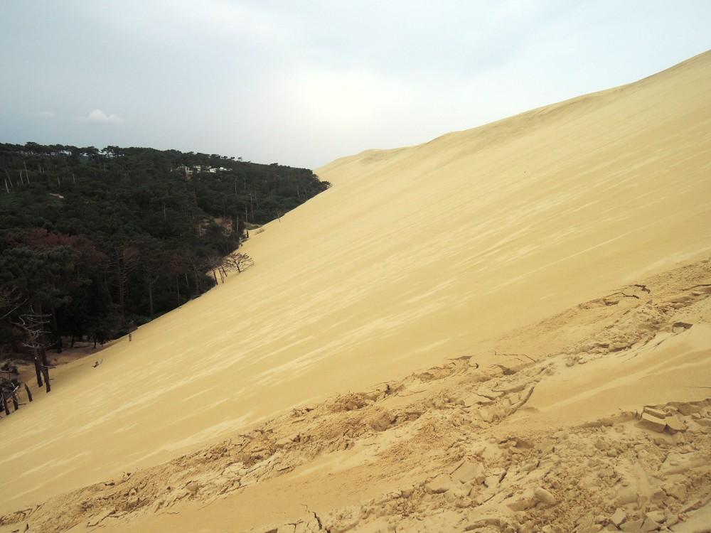 La duna va poco a poco tragándose al pinar